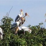 Cambodia Bird Conservation